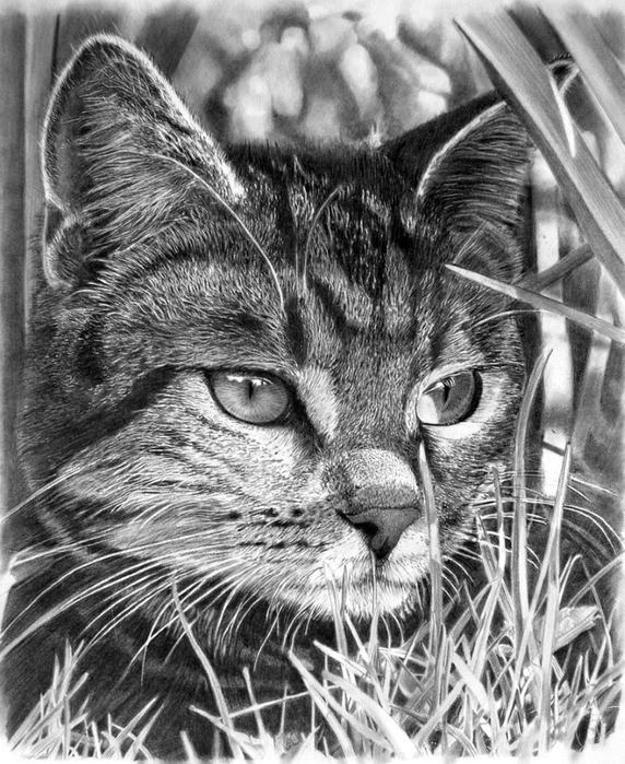 Hyper Realistic Drawings By Franko Clun Art Blog Markovart